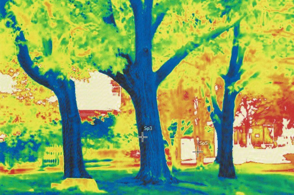 木の赤外線写真です。