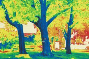 木の赤外線写真