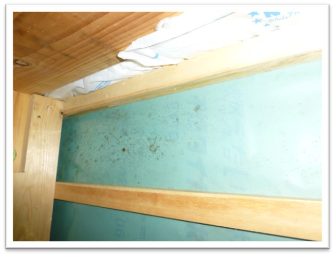 天井裏の防湿シートにカビが生えた写真